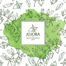 Refined Vegetable oil extracted from jojoba seeds